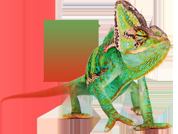 Red Chameleon Mascot